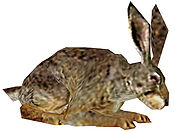 Rabbit (Brown).jpg